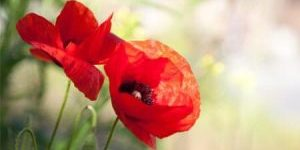 Lest-we-forget.-We-will-always-remember.jpeg